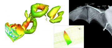 Creating the Next Generation of Bat-Inspired Aircraft