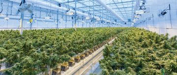 New Frontiers in Research: Cannabis, Air Quality, Health and Community Impact